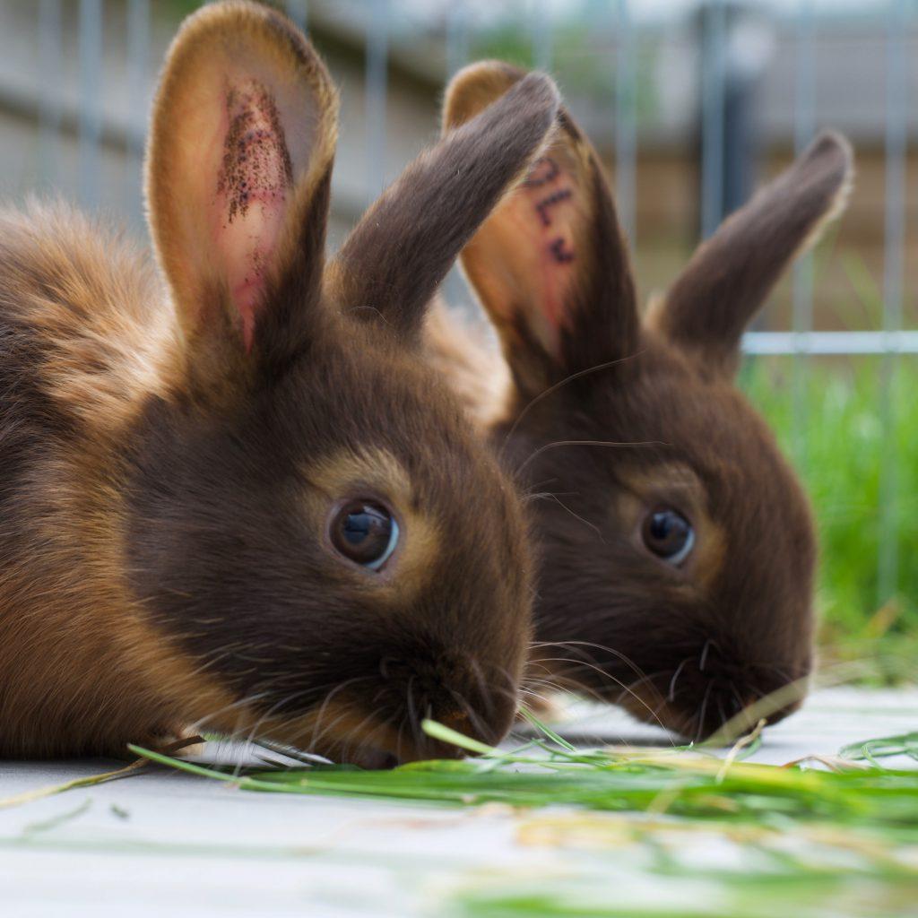 Bunny Brothers Coco & Izzy